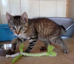Kitten Nr. 8 heißt jetzt JAREK und sagt ganz herzlichen Dank an seine liebe Patentante ELISABETH ♥
