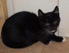 Friedhof-Kitten Nr. 1 heißt jetzt PUMBA  und sagt ganz herzlichen Dank an seine liebe Patentante SANDRA ♥