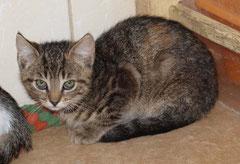 Karton-Kitten Nr. 1 heißt jetzt AMELIE  und sagt ganz herzlichen Dank an ihre liebe Patentante NATALIE ♥