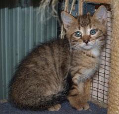 Kitten Nr. 9 heißt jetzt MATEUSZ und sagt ganz herzlichen Dank an seine liebe Patentante ELISABETH ♥