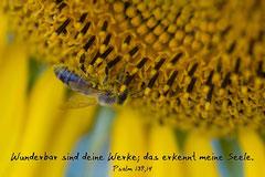 Bildnr. 44 / Sonnenblume