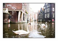 Bildnr. 208 / Amsterdam
