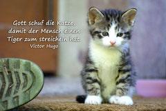 Bildnr. 27 / Kätzchen