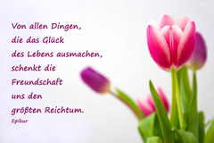 Bildnr. 18 / Tulpen