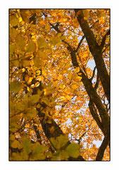 Bildnr. 219 / Herbstbäume