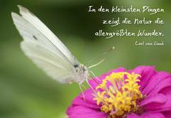 Bildnr. 3 / Schmetterling