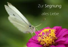 Bildnr. 181 / Segnung