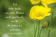 Bildnr. 2 / Blume