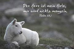 Bildnr. 24 / Schäflein