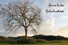Bildnr. 105 / Baum bei Heuweiler