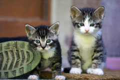 Bildnr. 224 / Kätzchen