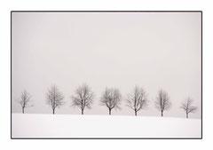 Bildnr. 207 / Schwarzwald