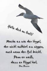 Bildnr. 25 / Vogel