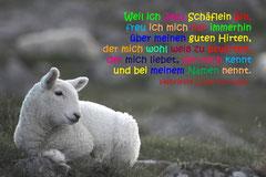 Bildnr. 23 / Schäflein