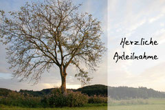 Bildnr. 103 / Baum bei Heuweiler