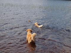 Schwimmstunde