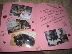 Die aufgeklappte Karte mit Bildern  der Katzen die wir unterstützen in den Familien