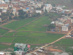 das leuchtende Grün der Reisfelder