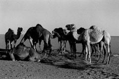 Algérie Tam - Djanet 620 km © Bruno Deveze