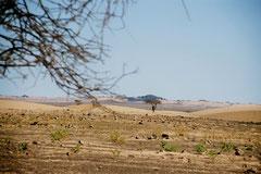 Mauritanie © Bruno Deveze
