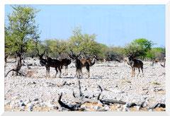 Bruno Deveze Namibie ©