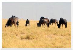 Bruno Deveze Botswana trek ©