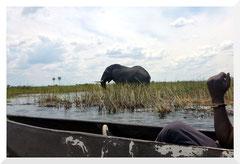 Bruno Deveze - Botswana - trek ©
