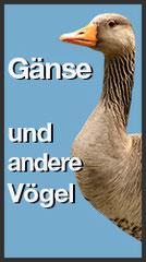Gänseabwehr und andere Vögel (Link)