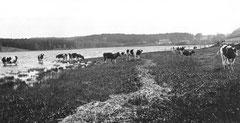 November: Blick über den Eutiner See zur Alten Schäferei