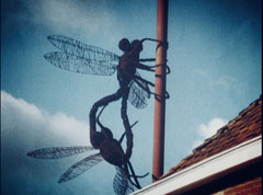 """ Parende Libellen"" => Kasteeltuine Arcen (Nl)"
