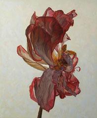 Κόκκινο λουλούδι στο λευκό φόντο  κώδικας №123  (90χ110cm)     λαδι σε μουσαμα