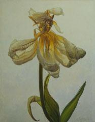 Άσπρο λουλούδι στο λευκό φόντο  κώδικας №125  (90χ70cm)    λαδι σε μουσαμα
