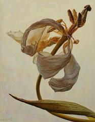 Ασπρο λουλούδι στο λευκό φόντο  κώδικας №121  (90χ70cm)   λαδι σε μουσαμα