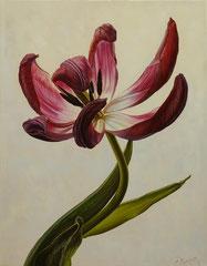 Κόκκινο λουλούδι στο λευκό φόντο  κώδικας №122  (90χ70cm)     λαδι σε μουσαμα