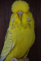 Vogelschau Bremervörde | Schaugruppensieger Aufgehellte
