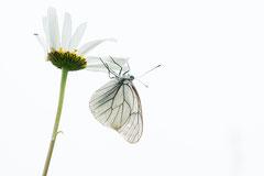 Winnaar Categorie Flora, Insecten, Macro. Fotograaf Petra van Boordt