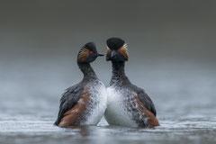 Winnaar Categorie Vogels. Fotograaf: Peter van der Veen