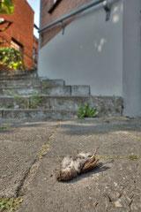 Winnaar Categorie Natuur in de stad. Fotograaf Mark van Veen