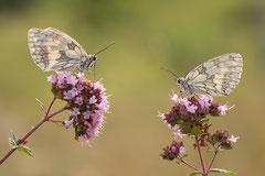 Winnaar Categorie Insecten, Fora en Macro. Fotograaf: Estner Smit-Branderhorst