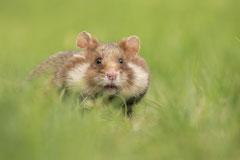 Winnaar Categorie Fauna: Elles Rijsdijk