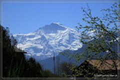 Vom Wohnzimmer und der Terrasse aus auf die Jungfrau (4158 m ü. M.) - das ganze Jahr schneebedeckt.