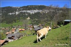 Im Moment (Mai 2010) grasen noch Kühe auf der Parzelle :-)