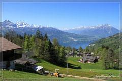 auf die Berner Alpen