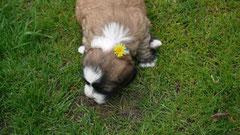 30.4.12 Dino mit Blume im Haar...
