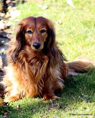 Remus, der Nachbarhund