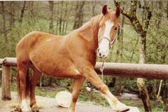 Pony Stute Tina