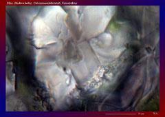 Efeu (Hedera helix), Calciumoxalatkristall, Feinstruktur-ca. 1350x