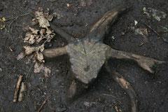 Bild 1 wurde im Kletterwald an der Ostsee fotografiert (beim genauen Hinsehen erkennt mann einen Ziegenbock).