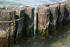 Bild 6 zeigt die Natur, sanft und kraftvoll zugleich.