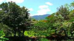 ウチのバルコニーからの風景。世界遺産の熱帯雨林。